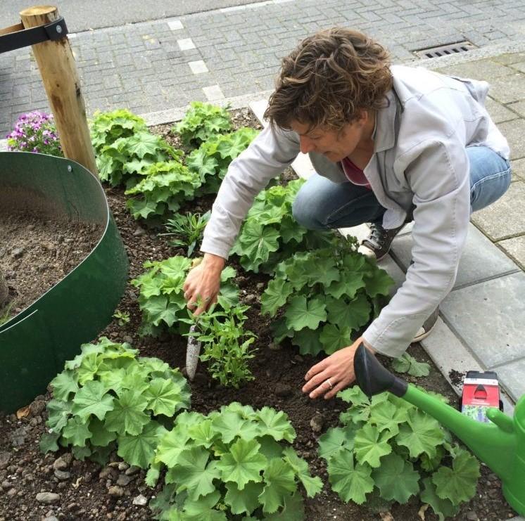 Home - biodiversiteit Groen mee boomcirkel - (2)